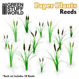 Papierpflanzen - Musabaum