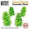 Plantas de Papel - Cannabis